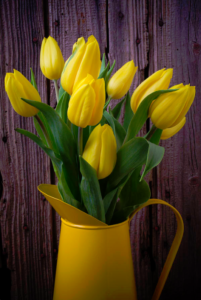 yellow tulips in a yellow vase